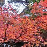 京都・山科 紅葉 散歩 毘沙門堂