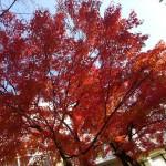 北近畿・北陸 2014 冬旅行 ① 日本海へ